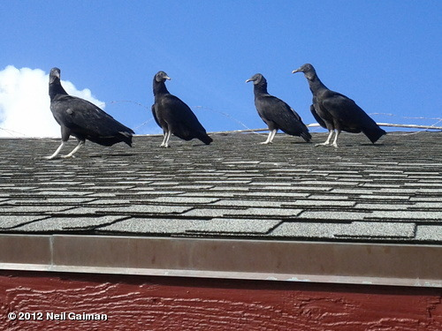 "qthewetsprocket:  neil-gaiman:  Vultures gather on a roof and grumble about the photographer. ""Patience my ass,"" says one. ""I say we kill him."" View more Neil Gaiman on WhoSay   Cripes, sounds like these vultures are having the same sort of day as I am."