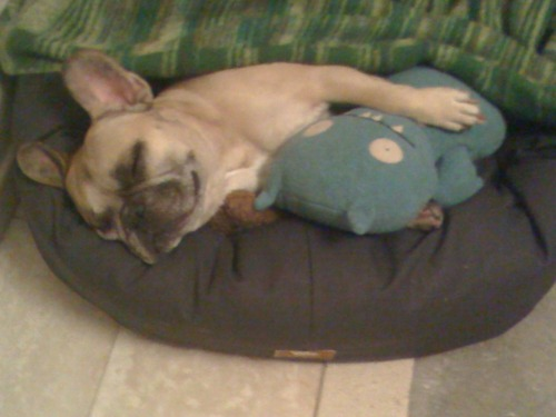 animalswithstuffedanimals:  Taj with his buddy Lil' Batty Submitted by doublediz