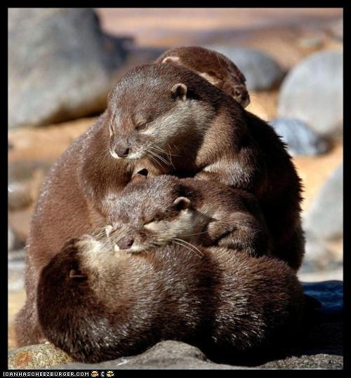 fuckyeahcuteanimalss:  (via Daily Squee: Pile o' Otters! - Lolcats 'n' Funny Pictures of Cats - I Can Has Cheezburger?)