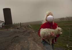 A little girl saves a baby lamb from a farm near the village of Kirkjubaejarklaustur in Iceland. People living next to the glacier where the Grimsvotn volcano burst into life were most affected. Ash shut out daylight and smothered buildings and vehicles.