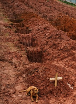 "A dog named ""Leao"" sits for a second consecutive day next to the grave of her owner, Cristina Maria Cesario Santana, who died in catastrophic landslides in Brazil. (Getty Images / Vanderlei Almeida)"