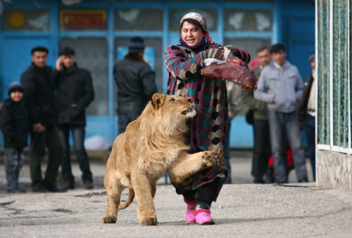 Zukhro, an employee of a Russian city zoo, walks with Vadik, an 18-month-old male lion. (Reuters / Stringer Russia )