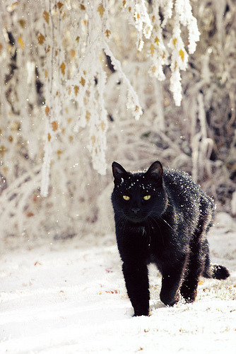 photogenicfelines:  (by AmbreDawn)