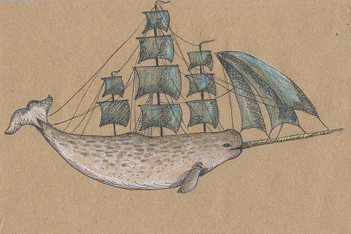 The Narwhal, my latest & greatest obsession