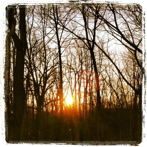#beautiful #sunset in the #woods. #trees #trail #run  (Taken with instagram)