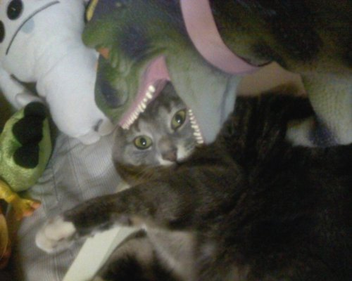 "This is a old picture of my cat but I made my dinosaur eat her and shes like ""wtf""."