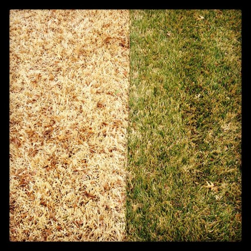 Greener Grass (Taken with instagram)
