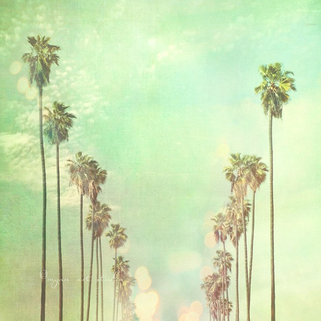 Los Angeles California Palm Trees photo by MyanSoffia