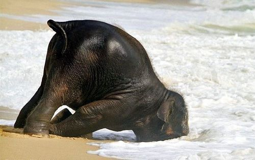 y-u-r-i:  peace-elephants-and-balloons:  Seriously, this is just too precious :)  hahahahahahahaha i couldn't resist. This is the cutest picture ever <3
