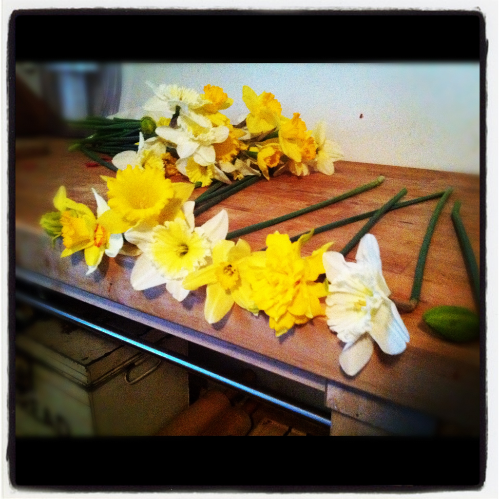 daffodils from the yard.