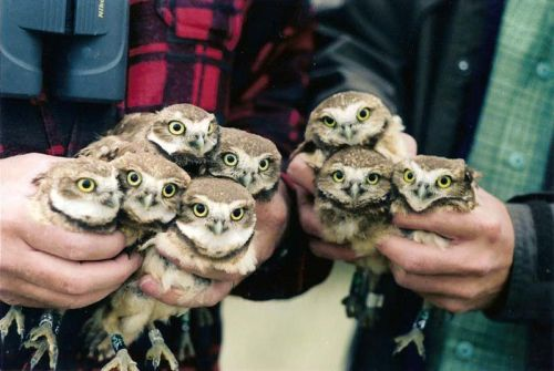 Bunches of owls! via:cutestuff