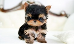 blog-girl33:  I want this lil guy :]