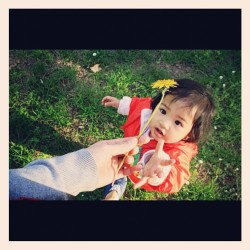 Spring is coming #spring#flower#kid#baby#babygirl#cute#picture#shots#photography#canon#ipod#popular#instagramers#instadaily#instagram#hand#give#pinay#asian#cutie#awesome#like (Taken with instagram)
