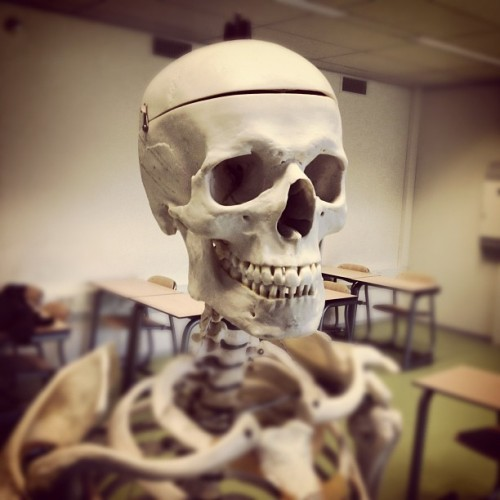 I met this guy today, I think we'll be good friends. #skull  (Taken with instagram)