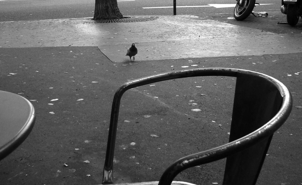 "Montmartre Paris own  ""I have come to make a nest in your shoe. I want your step to be light.""Leonard Cohen-The Dove"