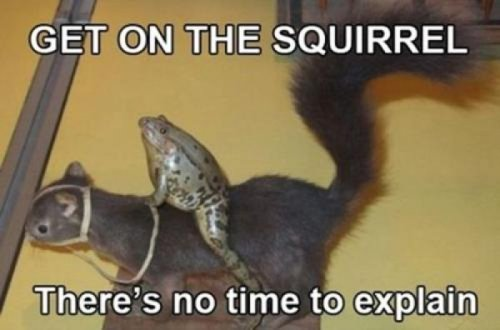 "Frog Riding Stuffed Squirrel   ""To the strange bearded guy who most definitely owns us' collection of dried meats."""