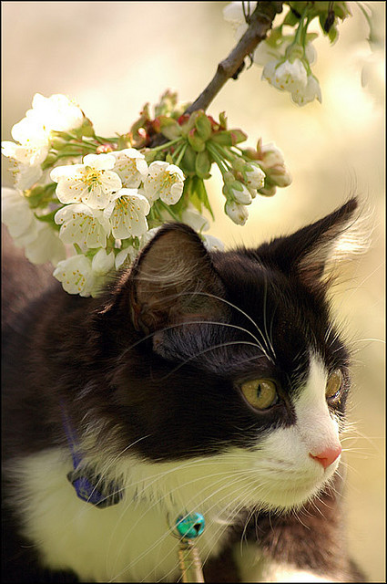 Cat & flowers by schumix on Flickr.