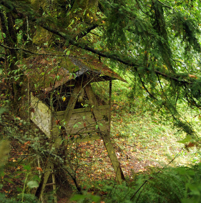wonderlanephoto:  Treehouse in the forest from above, ladder, Seattle, Washington, USA on Flickr.