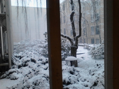 ohgeeznora:  surprise spring snow in oberlin! the courtyard between king and rice  Surprise snow is gone again. More soon?