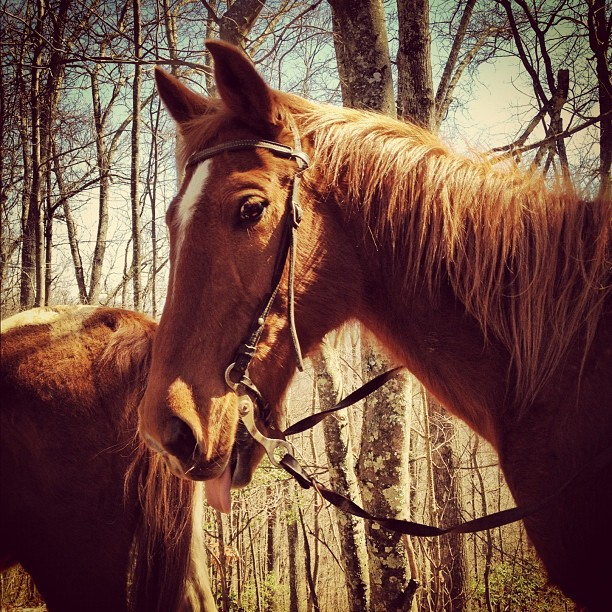This is #Cisco… We have a bond now.. #Horse #Horses #Horseback #Tongue #Eye (Taken with instagram)