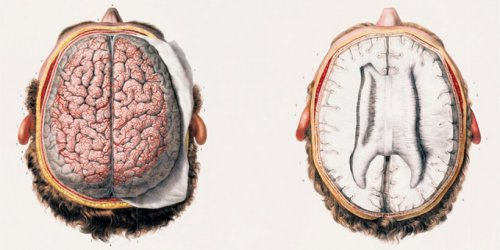 medicalstate:   Transverse Cranial Prosection from Atlas of Anatomy by Jean Baptiste Marc Bourgery, illustrated by Nicolas Henri Jacob.