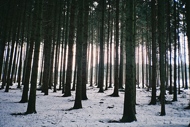 I like woods by Sebastian Reiser on Flickr.