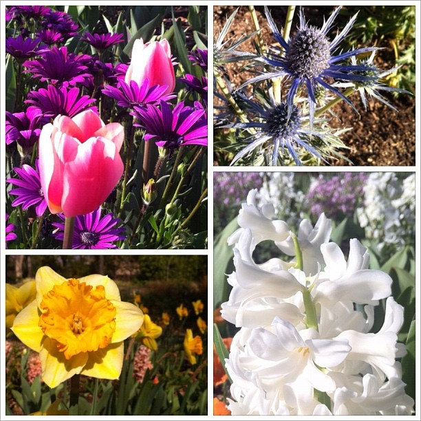Spring springing (Taken with Instagram at Descanso Gardens)