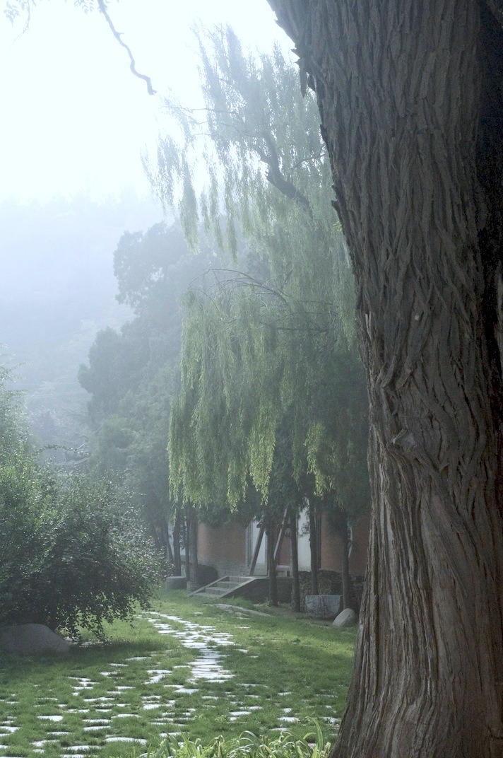 A Quiet Path, Nanguo Temple, Tianshui, Gansu. Wish I was walking through here, instead of trying to write an essay.