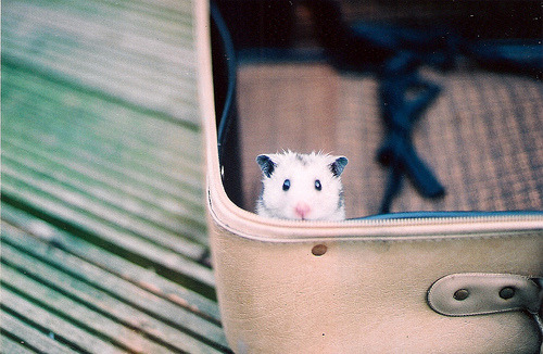 4doors:  (by andrew.nuding)  stowaway hammy!
