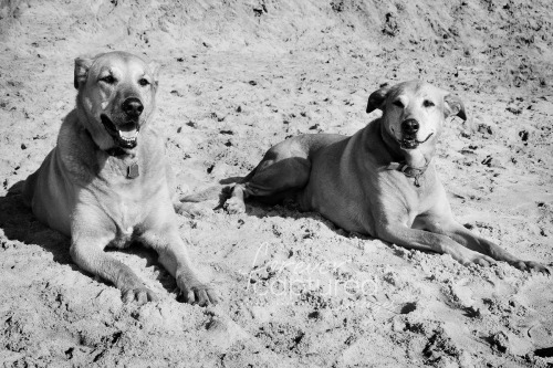 ~ Day 68 ~ Roxy ~ beach ~ sisters ~ black and white