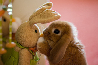 Every little bunny …..Has a habit that is funny.