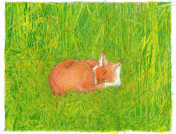 Asleep in the grass : m. Landowski