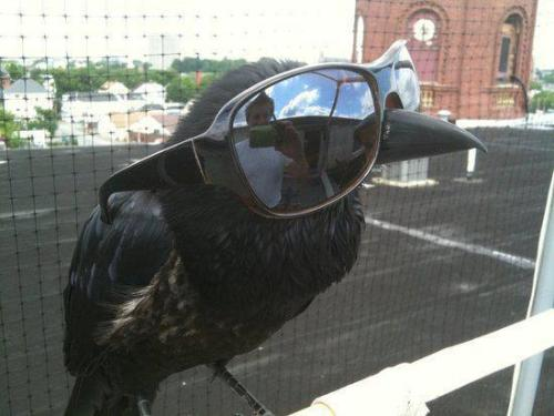 "Once upon a midnight DEAL WITH IT.  I give a fuck, nevermore.  merely a bro, nothing more.  #suddenly there came a swagging as of someone gangsta rapping #rapping at my chamber door  Quoth the raven, ""Swag galore""    #edgar allan bro  And my mom still doesn't get why tumblr is so fucking amazing."
