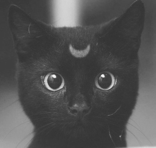 drogarsi:  forever-yang:  i want a cat with a moon on its head..  ^