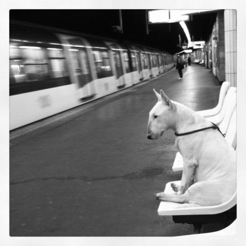 Nenette waiting for the train