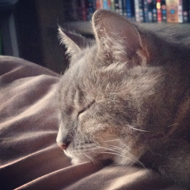Lovely smokey (Taken with instagram)
