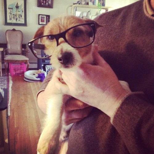 stephulahoops:  I lost my glasses, but Ringo found them!!!!! (Taken with instagram)  My family's pup!  Home for the weekend means top notch photo moments.