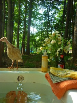 velvet-castles:  this is my paradise  bath tubs and nature