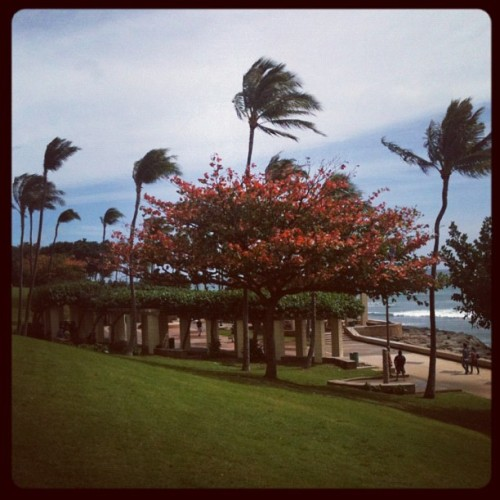 just another beautiful day in hawaii nei' #instagram #100likes #80likes #70likes #60likes #50likes #40likes #30likes #20likes #20likes #10likes #iphone #iguser #iguser #pictureoftheday #picoftheday #photooftheday #kakaako #beack #park #trees #palmtrees #coconuttrees #grass #sunny #beautiful  (Taken with Instagram at Kaka'ako Park)
