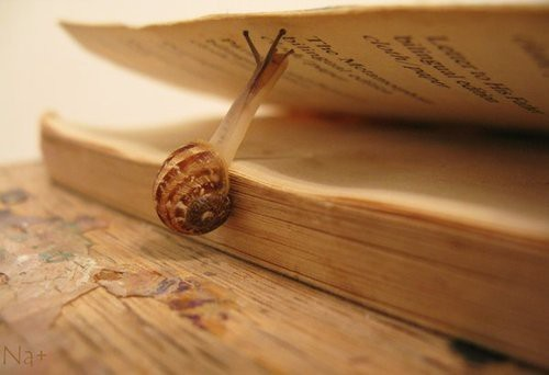 Reading at a snail's pace.