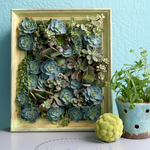 Framed succulent planter DIY