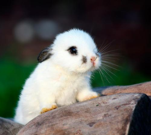 White Little Rabbit By:Mr.Picture