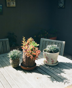 grahamwalzer:  Poppys Plants. Carmel, California. 2012