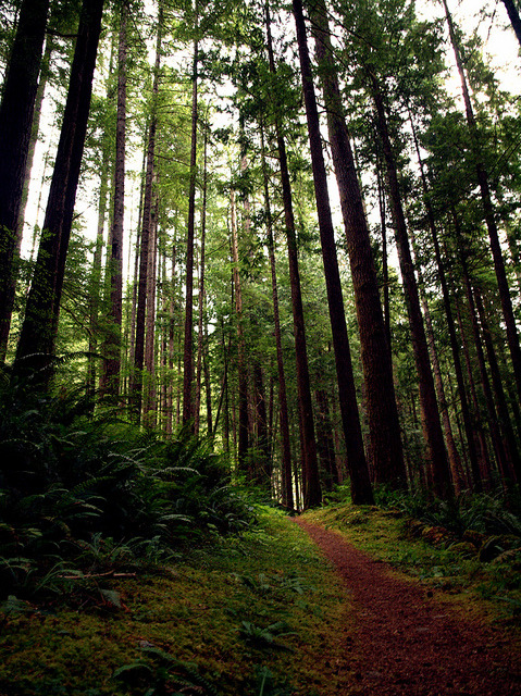 ourwildways:  Walk Amongst Giants by reclusive.North on Flickr.