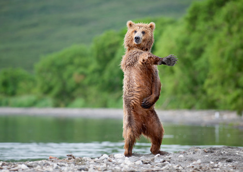 he's got moves people:   I like to move it. [via]