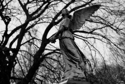 Greenwood Cemetery in Brooklyn, NY. #2