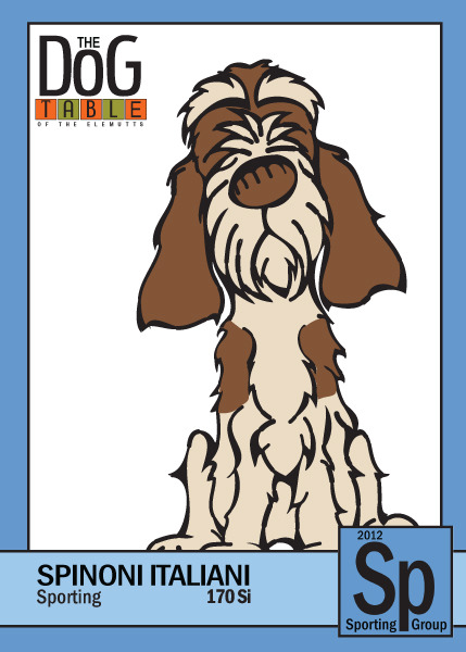 170 Si - Spinone Italiano from the Sporting Group