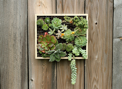 (via in words and pictures: Wall-Mounted Succulent Garden)