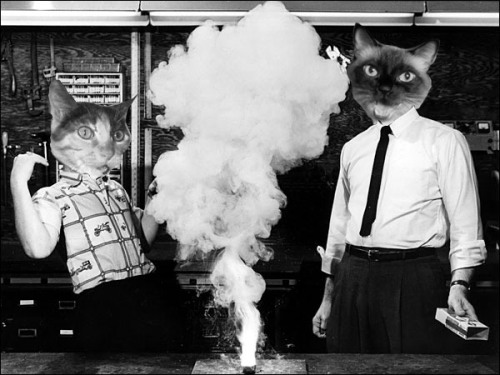 Cat Science debuts on Television, 1966