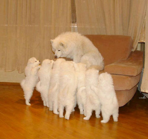 animalstalkinginallcaps:  SEVEN YOUNG LADIES STAND BEFORE ME … BUT I ONLY HAVE SIX PHOTOS IN MY HANDS. AND THESE PHOTOS … REPRESENT THE GIRLS … WHO ARE STILL IN THE RUNNING TOWARD BECOMING … AMERICA'S NEXT TOP MODEL. I'M KIDDING, OBVIOUSLY. NONE OF YOU ARE TALL ENOUGH FOR RUNWAY WORK, PLUS I DON'T HAVE HANDS. NOW GET OUT OF HERE AND GO PLAY IN THE YARD. I NEED TO TAKE A LITTLE NAP.